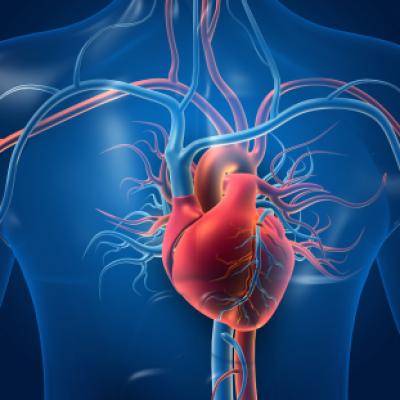 Groepslogo van Cardiovasculaire/ pulmonale reacties